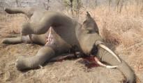 elephant-360766